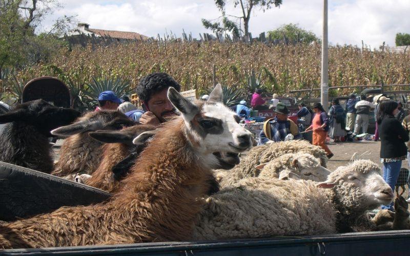 Equateur-017
