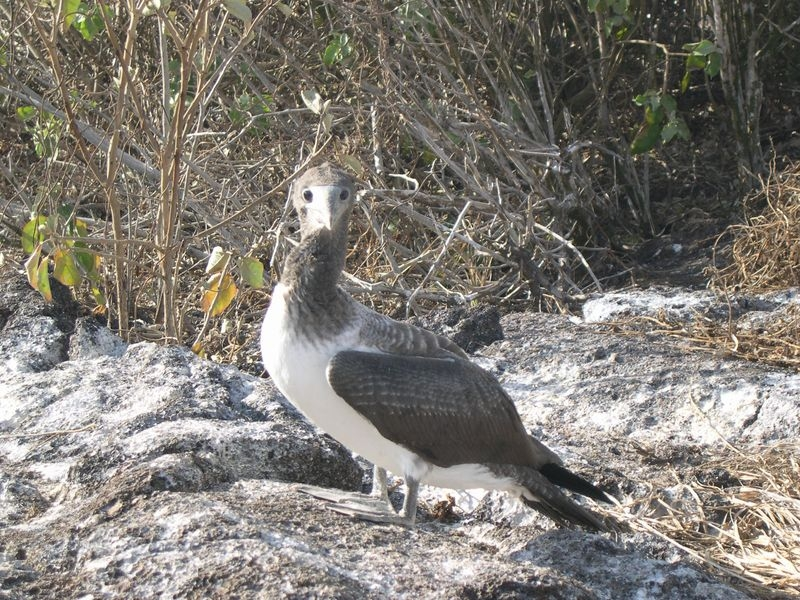 Galapagos-040