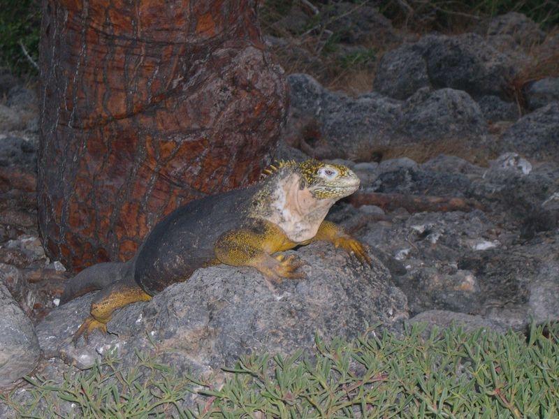 Galapagos-049
