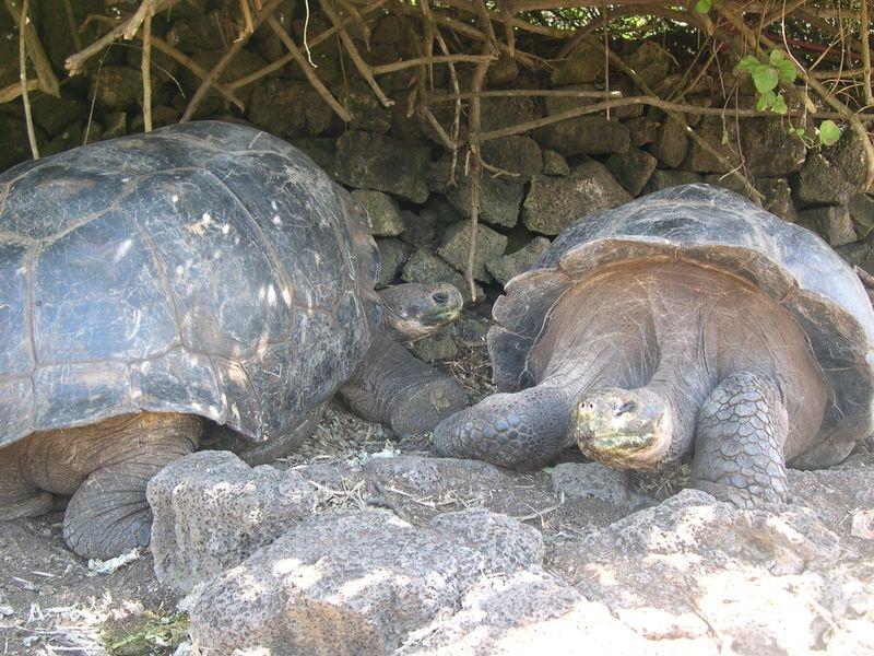 Galapagos-060