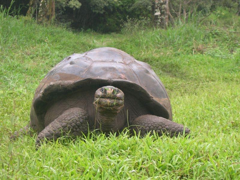Galapagos-063