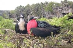 Galapagos-028
