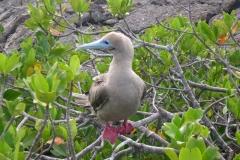 Galapagos-030
