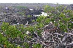 Galapagos-031