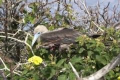 Galapagos-038