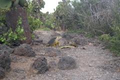 Galapagos-052