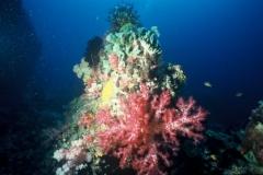 Indonesie sous marines 006