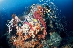 Indonesie sous marines 007