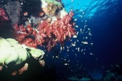 Indonesie sous marines 018