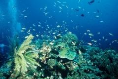 Indonesie sous marines 020