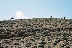 Maroc 2003 023