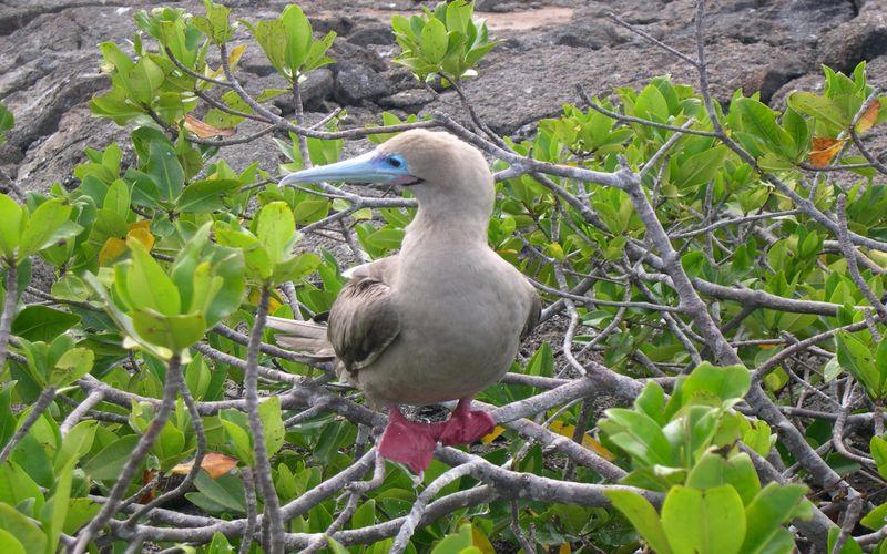 Galapagos0
